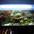 20091114_aquarium_1
