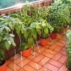 diverse Chilis