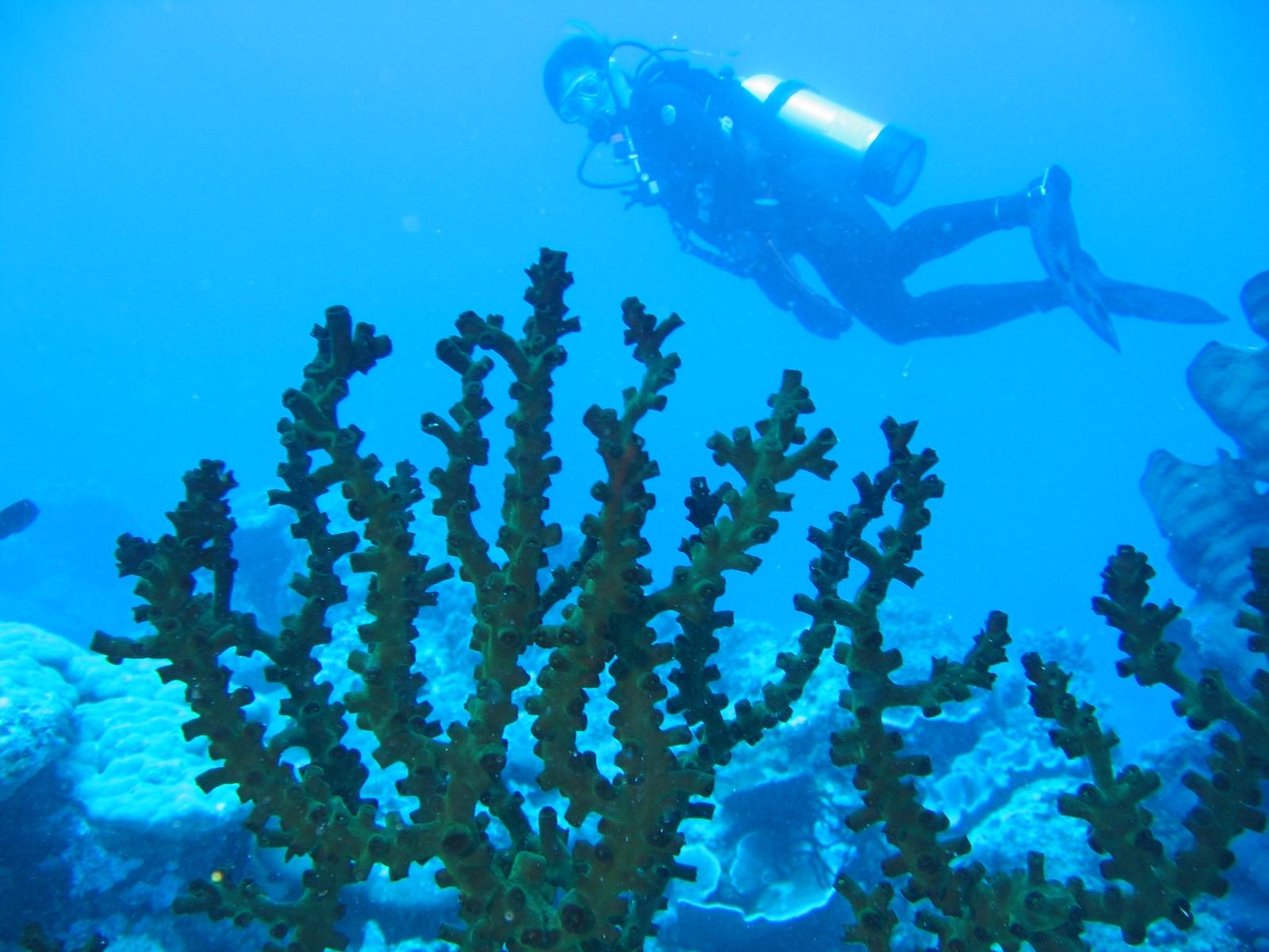 Agincourt Ribbon Reef - Martins Buddy