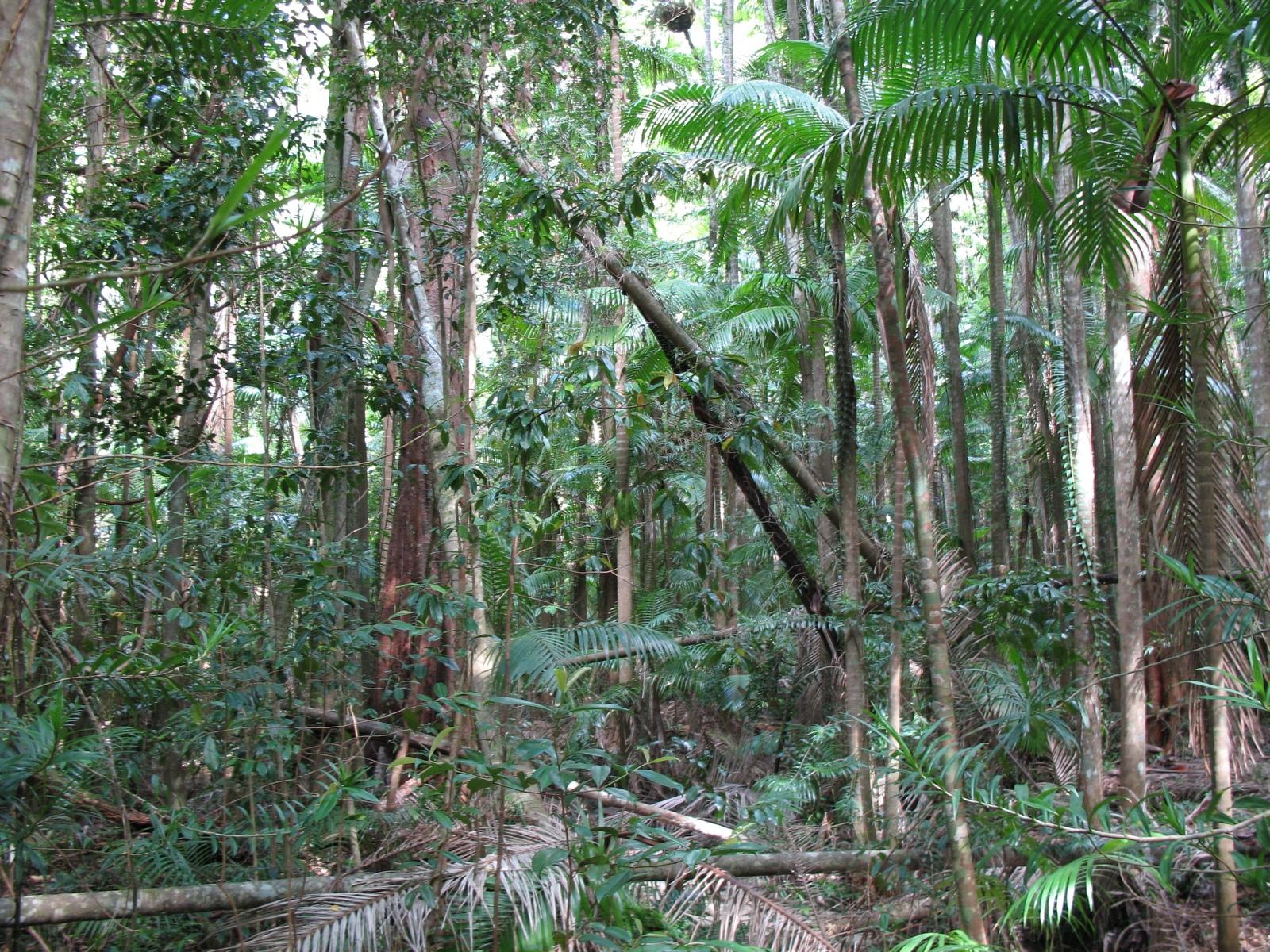 Fraser Island - Pile Valley