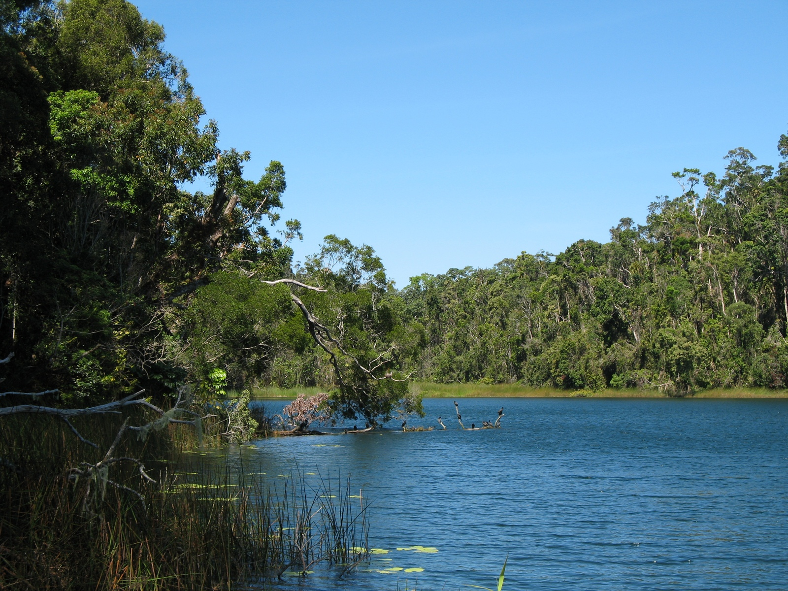 Lake Barrine (Crater Lakes National Park)