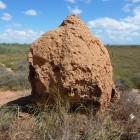 Termitennest zwischen Coral Bay und Exmouth