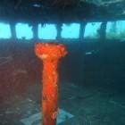 Tauchen an der HMAS Swan