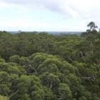 Blick vom Gloucester Tree