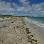 Strand von Coogee Beach