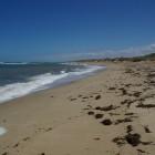 am Strand von Dongara