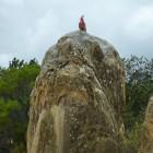 Papagei auf einem Pinnacle