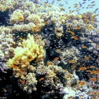 Fischsuppe knapp unter der Wasseroberfläche