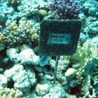 Unterwasserstudien