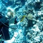 Alex mit Anemonenfischen